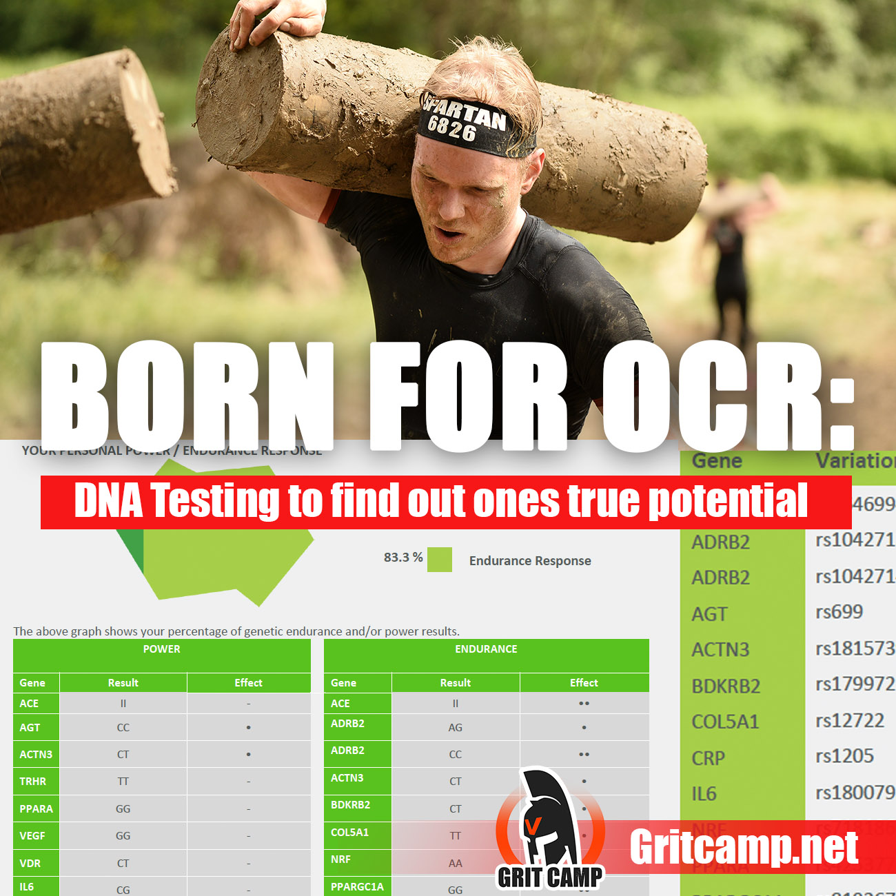 Born for OCR? Discovering My Athletic Potential With DNA Testing